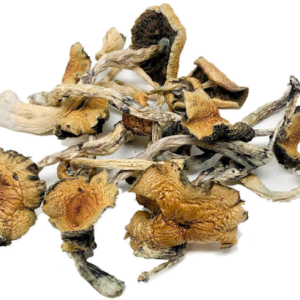 Malabar Magic Mushrooms